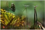 """67 """"化彩""""摄影《荷塘蜻蜓》"""