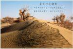 07西南沙漠胡杨