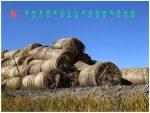 100【神州大地】内蒙古-《军马粮》