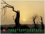 94【神州大地】南疆-沙漠胡杨