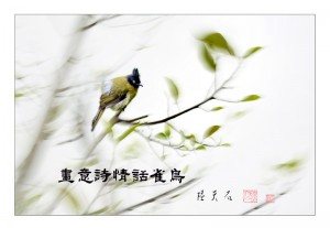 01画意诗情话雀鸟