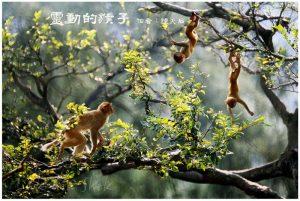 03灵动的猴子