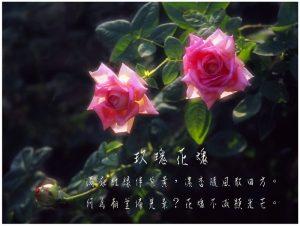 15玫瑰花魂