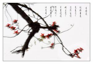 17木棉花