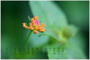 24花魂(花卉微距镜头摄影作品)