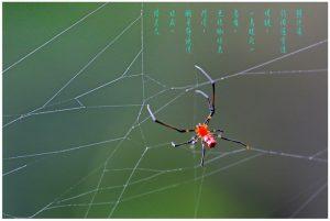 21显神通 ﹙蜘蛛微距镜头摄影作品﹚
