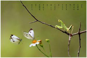 25妙想﹙螳螂微距镜头摄影作品﹚