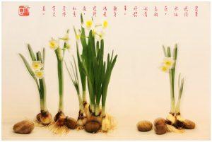 42《 迎春花 》