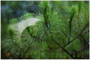 """61 """"化彩""""摄影《园林景色》"""