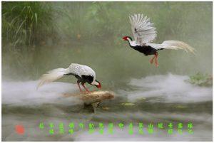 68 《瑶池雀鸟》