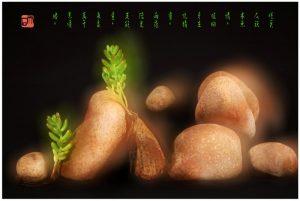 """75 """"化彩""""摄影《石头植物》"""