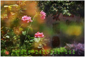 """98 """"化彩""""摄影《大埔海滨公园》"""