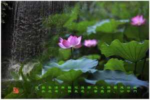 """99 """"化彩""""摄影《城门谷公园》"""
