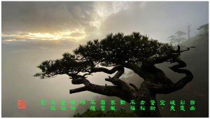 102【神州大地】三清山-《劲松》