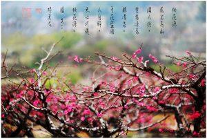 36廣東省連平縣之旅